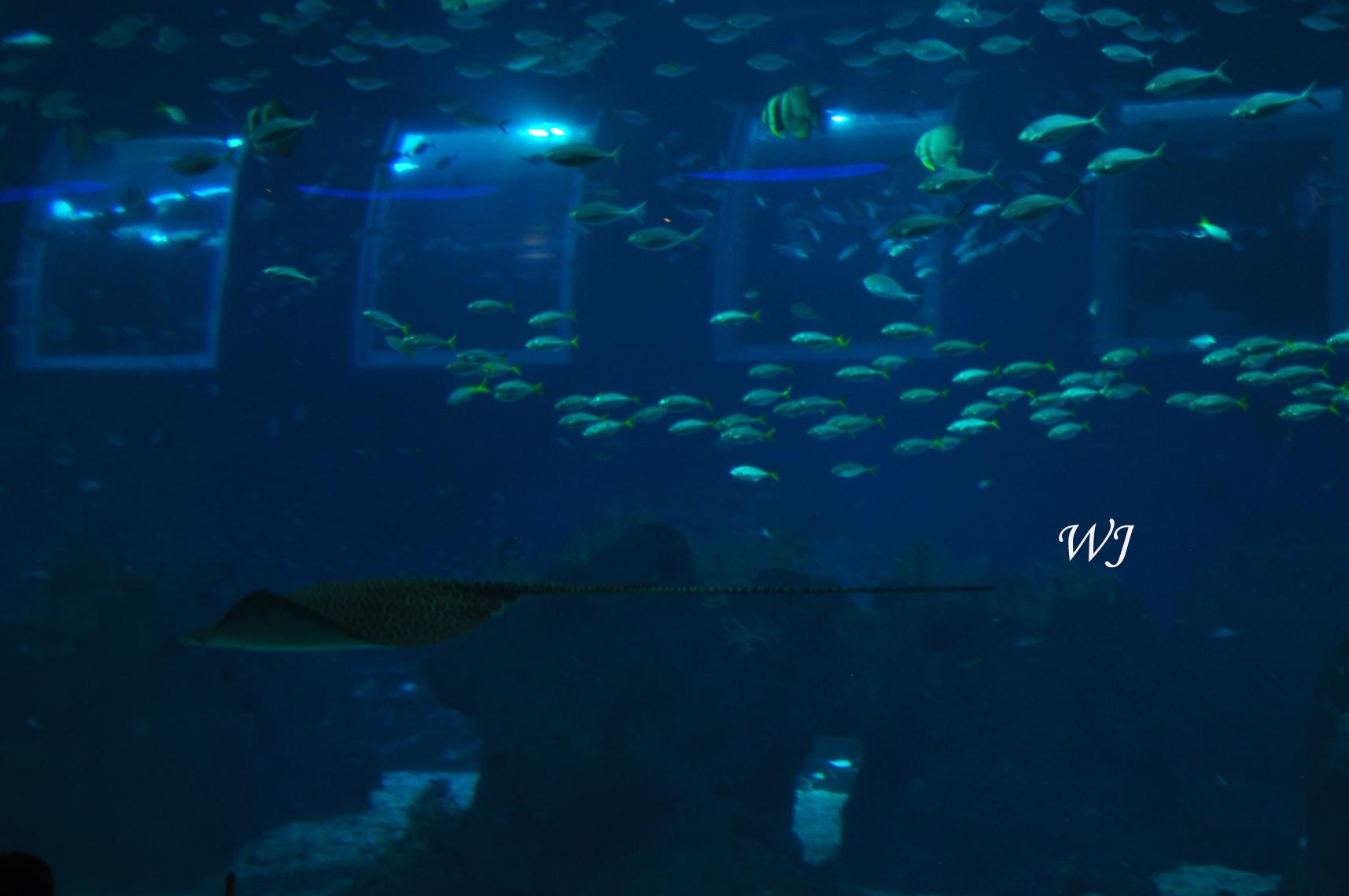 Universal Studios Singapore Underwater World SEA Aquarium Singapore...